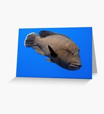 Napoleon Wrasse Greeting Card