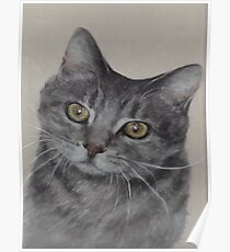 Cat With Inquisitive Look Poster