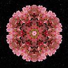 Bold as Spring by Karen Casey-Smith