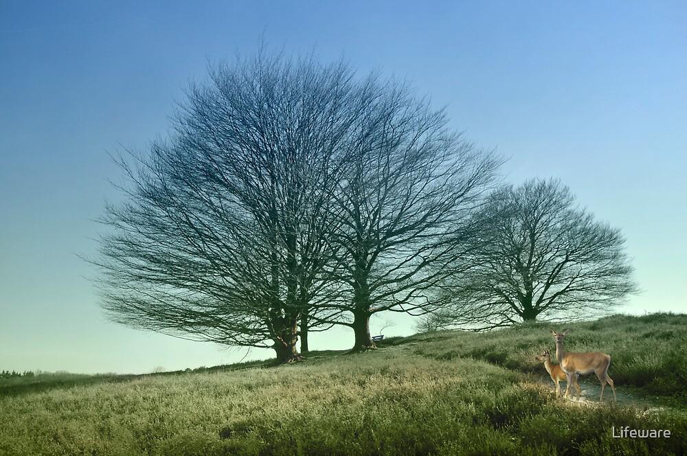 Idyllic spring by Lifeware