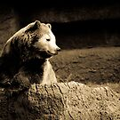 A Chilled Out Bear by ACACrown
