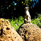 Timon! by ACACrown