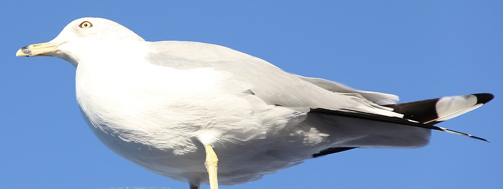 Bird is the Word by David Misko