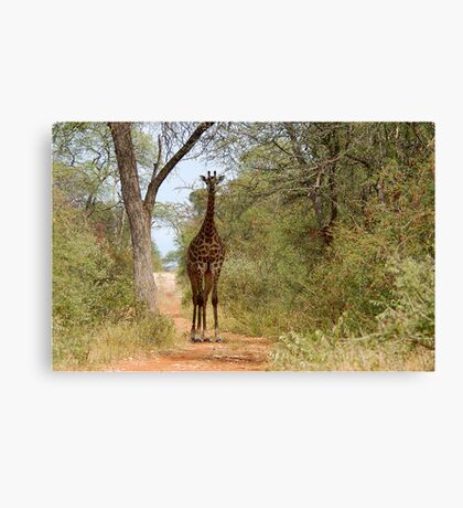 CAN I HELP, ARE YOU LOST? - GIRAFFE – Giraffa camelopardalis Canvas Print