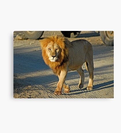 Straight in the eyes Canvas Print