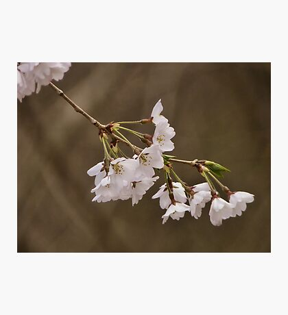 Return of Spring Photographic Print