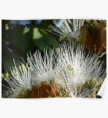 Jungle Blossoms In The Sunshine - Flores De La Selva En La Luz Del Sol Poster