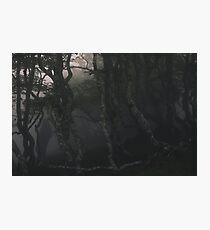 SULDR & LAMINA Photographic Print