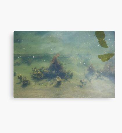 Underwwater Garden Metal Print