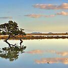 Lone Mangrove Dusk by Ken Wright