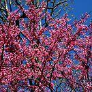 Spring in the Ozarks by John Carpenter