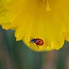 Lady Daff. by relayer51