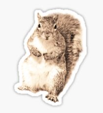 Squirrel t-shirt Sticker