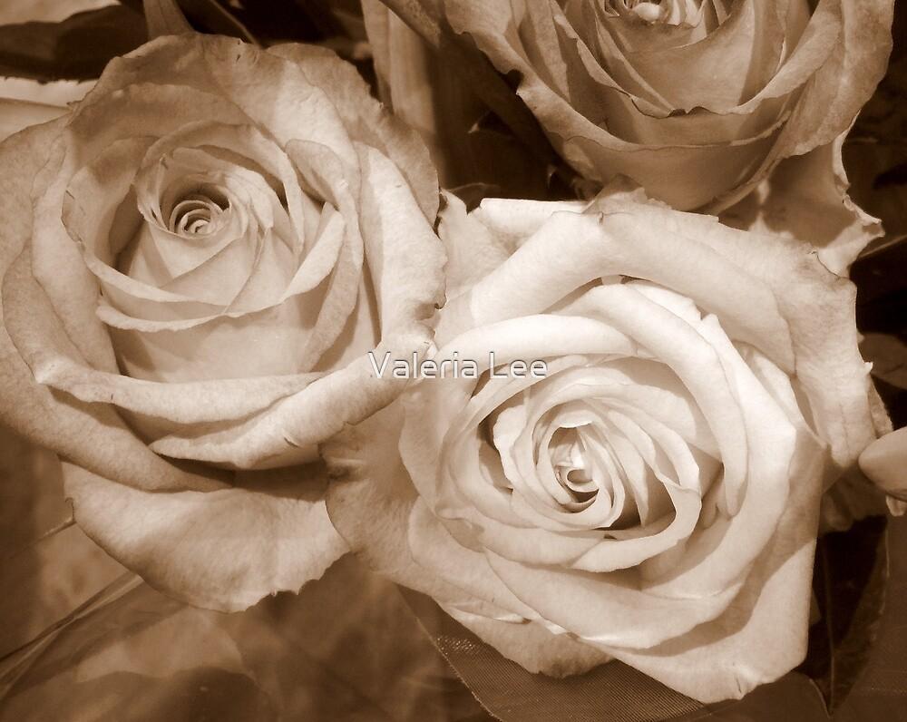Sepia Rose by Valeria Lee