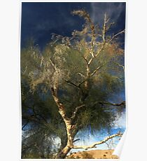 Colorado River Tamarisk Poster