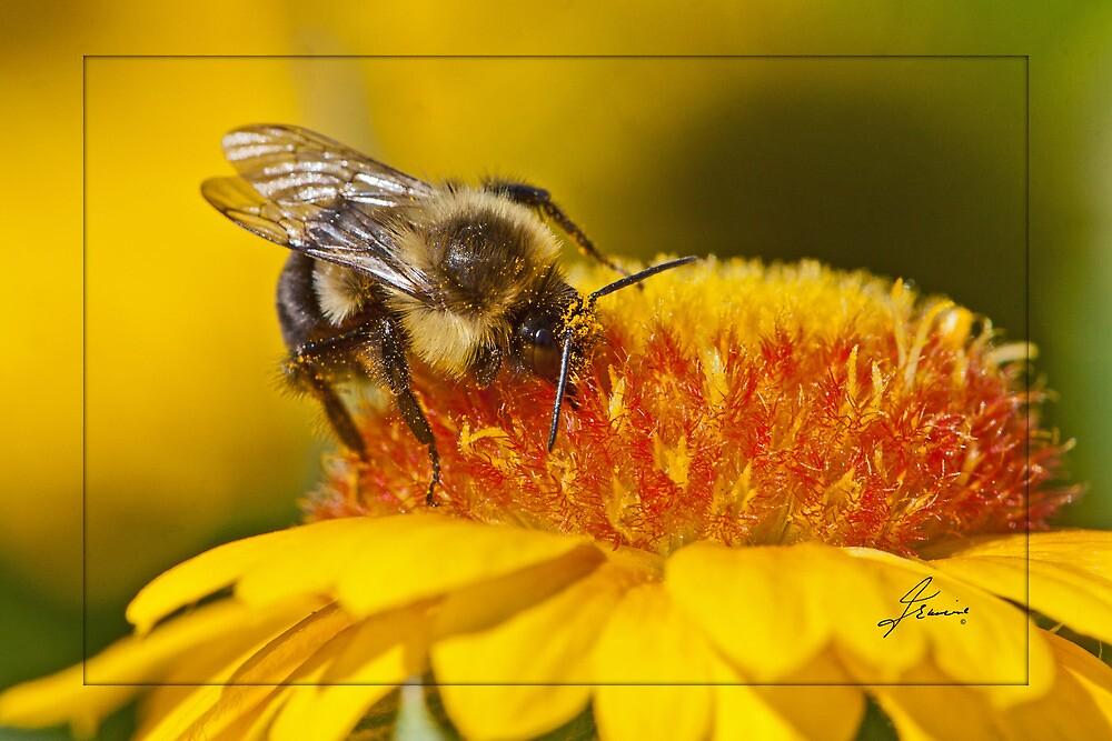Pollen Bathing by DigitallyStill