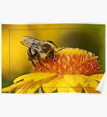 Pollen Bathing Poster