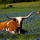 Stop and smell the bluebonnets! by guppyman