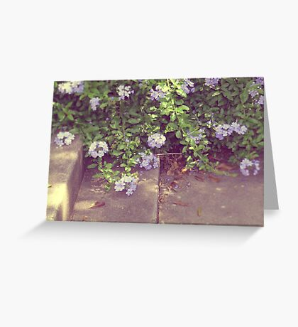 softly waiting... Greeting Card