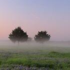 Morning Mist Above the Bluebonnets - Denison Dam, Texas, USA by aprilann
