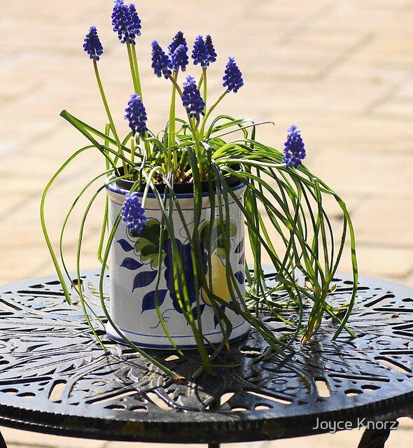 Pot of flowers by Joyce Knorz