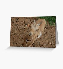 Splendaview Goat Greeting Card