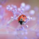 Ladybird lovely by Mandy Disher