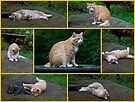 Marvelous Max The Marmalade Cat #2 by MotherNature