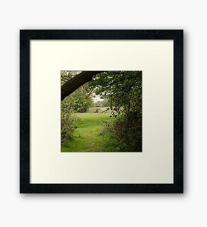 Dreaming of Playtime Framed Print