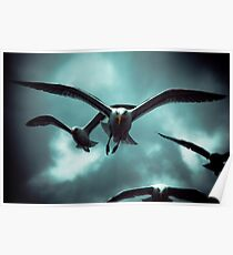 Sea Gulls - Renard Poster