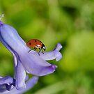 Lady  Hyacinth. by relayer51