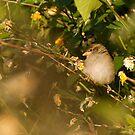 Sparrow by Lennox George