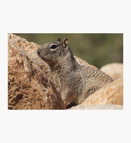 Rock Squirrel  Photographic Print