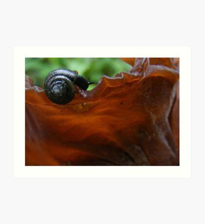 Snail on Tree-ear Fungi Art Print
