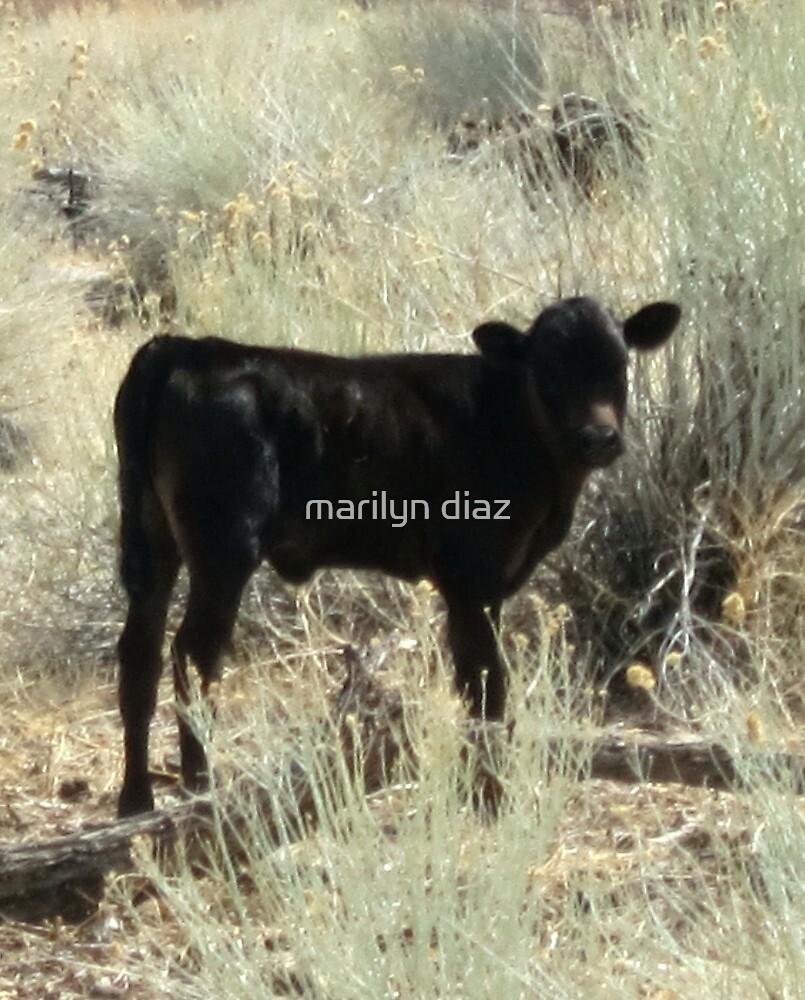 Just A Little Bull by marilyn diaz