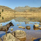 ..And Tarn Came Too by Jamie  Green