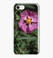 Portulaca aka Moss Rose flower Leith Park Victoria 20151005 0443   iPhone Case/Skin