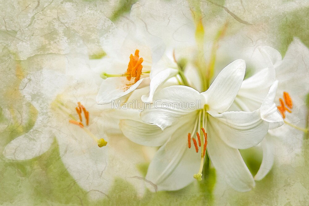 Easter Lily Dream by Marilyn Cornwell