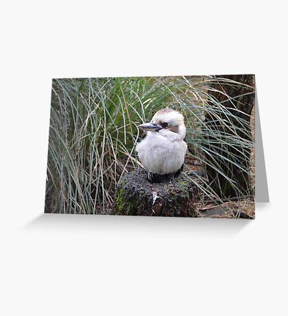 Baby Kookaburra Greeting Card