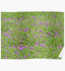 Texas Stork's Bill Grows in Large Groups Poster