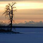 Frozen Silhouette by Darcy Overland
