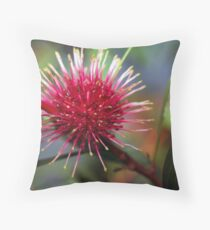 Pincushion Hakea Throw Pillow