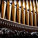 Golden organ pipes and wood by Jenny Setchell