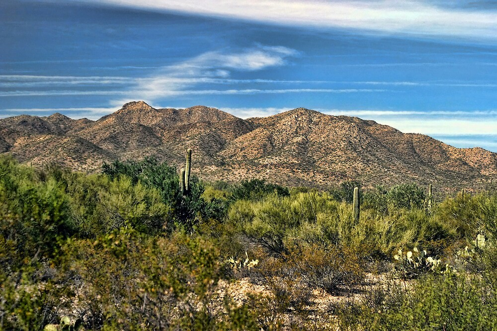 The Beautiful Arizona Desert by Carolyn  Fletcher