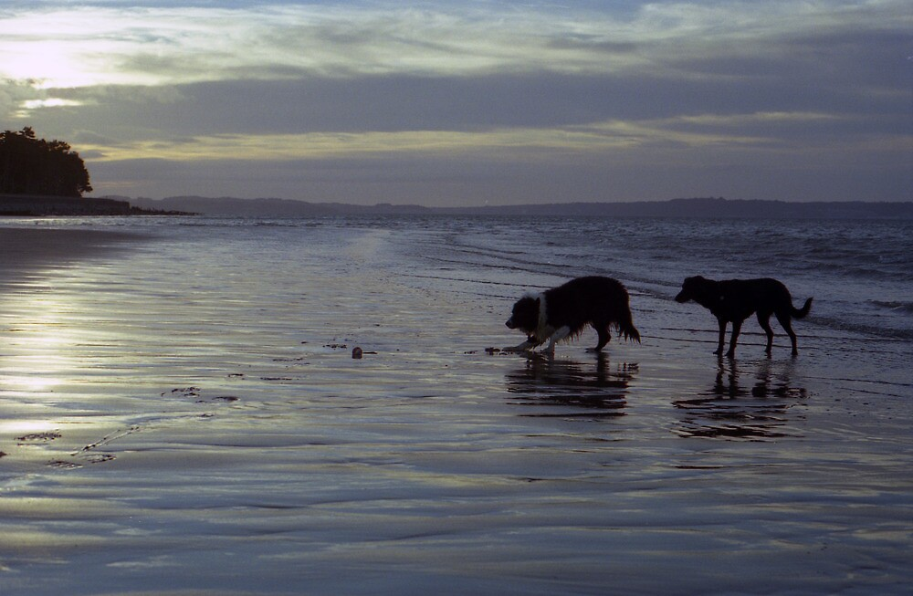 Indy and Shela on the beach by Michael Haslam