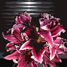 Dark Lilies in a vase by peterrobinsonjr