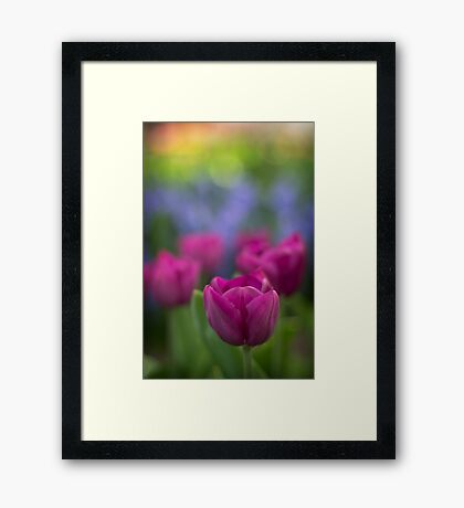 Rainbow Colours Framed Print