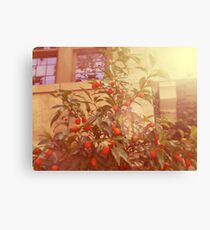 Summer of 1979 Canvas Print