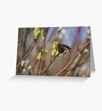 Now this is a sign of spring!!!! Greeting Card