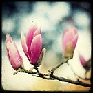 No Spring Without Magnolia by Marc Loret